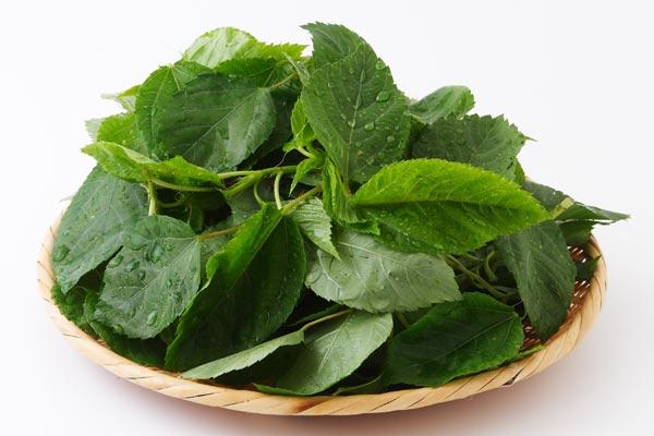 夏野菜モロヘイヤの栄養成分はすごい!簡単おすすめレシピ