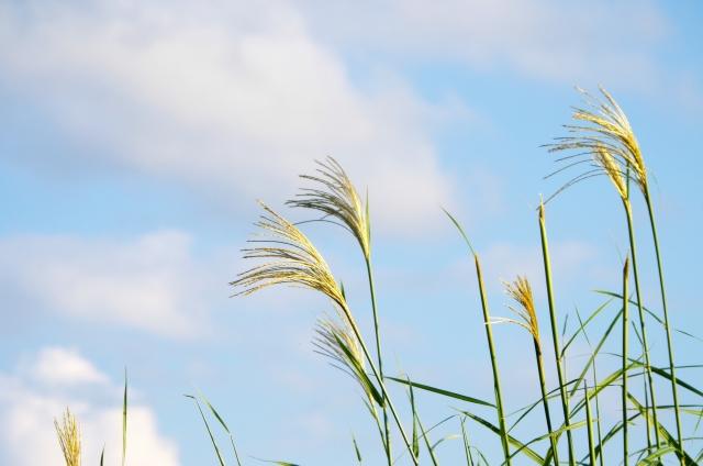 【画像】秋の七草はいつ食べる?覚え方はこれ!