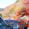 2017年 高尾山の紅葉の見ごろや時期は?もみじまつりとは?