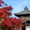 東福寺の紅葉2017年の見ごろの時期は?アクセス方法は?