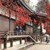 2017年の仁和寺の紅葉の見頃は?ライトアップやアクセスは?