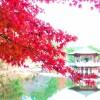 奈良の紅葉2017年の名所や見ごろは?ライトアップは?