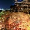 2017年 京都の紅葉のライトアップ名所は?見頃や時期は?
