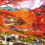 2017年の香嵐渓の紅葉の見ごろや時期は?ライトアップの時間は?
