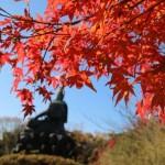 2017年の鎌倉の紅葉の時期や見ごろは?おすすめやライトアップは?