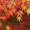滋賀県の紅葉2017年の名所や穴場はどこ?見ごろはいつから?