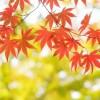 2017年 那須高原の紅葉の時期や見頃は?ロープウェイもおすすめ!